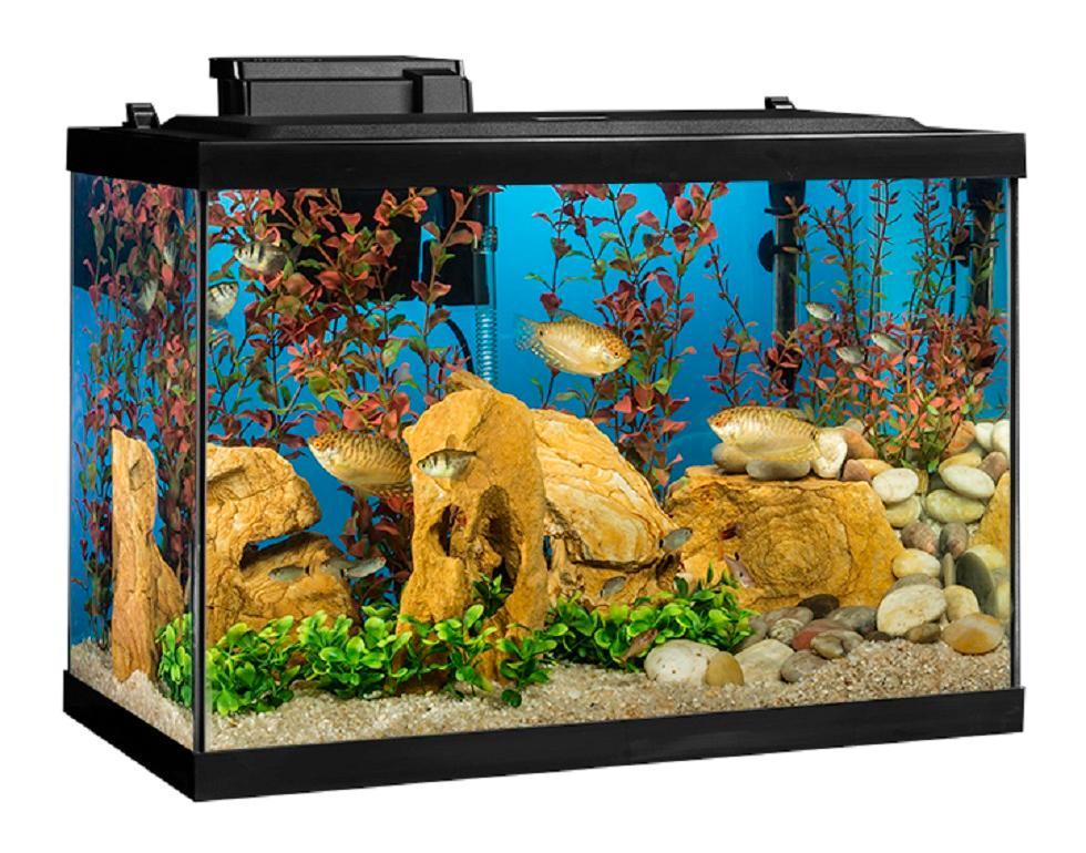 Tetra aquarium 20 gallon fish tank kit for Fish tank decorations amazon