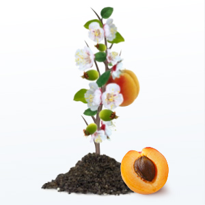 St. Ives Fresh Skin Apricot Body Scrub, skin, exfoliate, dermatologist, cleanser