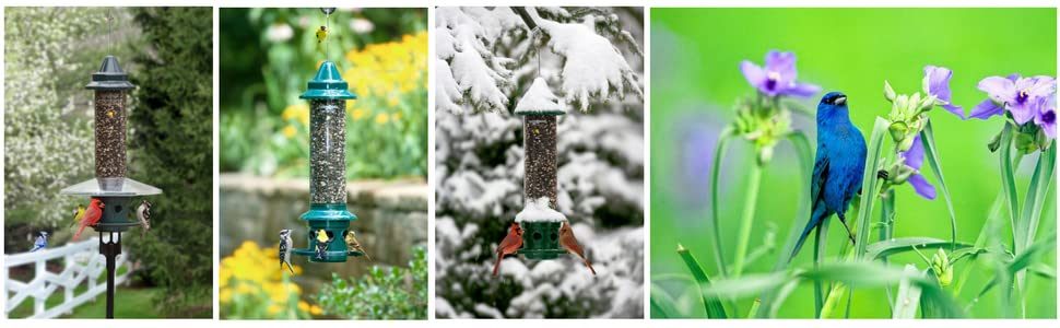 squirrel-proof feeder, birds, beautiful pictures, bird feeder