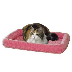 Cat on Fashion Pink