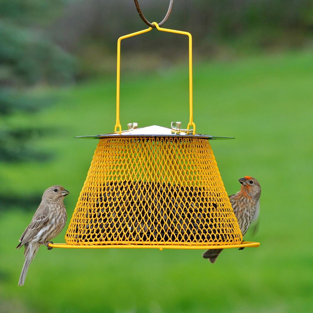 the p yellow straight feeders bird feeder no tube sided finch