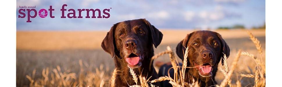 dog treats, made in usa dog treats, jerky treats, healthy dog treats