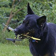 Dog chews on Ominus