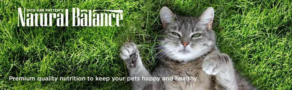 happy healthy cat