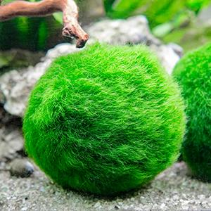 January favorites moore crafts for Betta fish moss ball