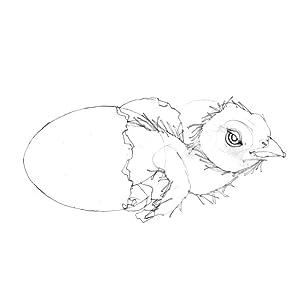 Bird sketch, Steve Jenkins, Children's Book