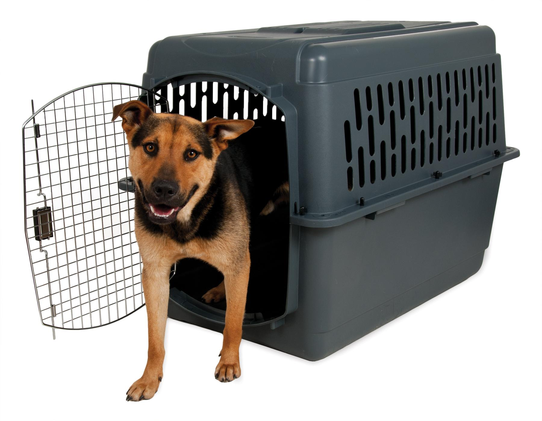 Amazon Com Petmate Pet Porter 2 Kennel For Pets 30 To