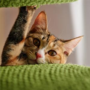 High Fiber Low Calorie Cat Food