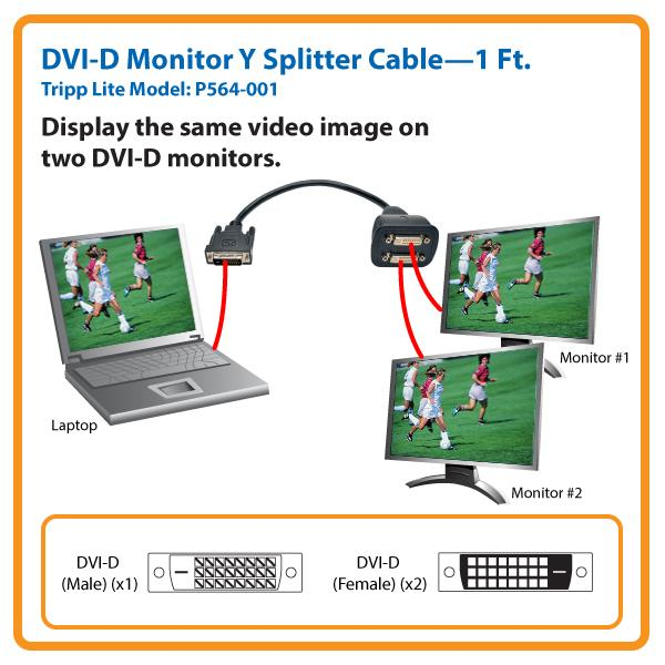 amazon.com: tripp lite dvi y splitter cable, digital ... guitar wiring diagram active 1 volume 2 pickups 3 way switch 1 pc 2 monitors diagram