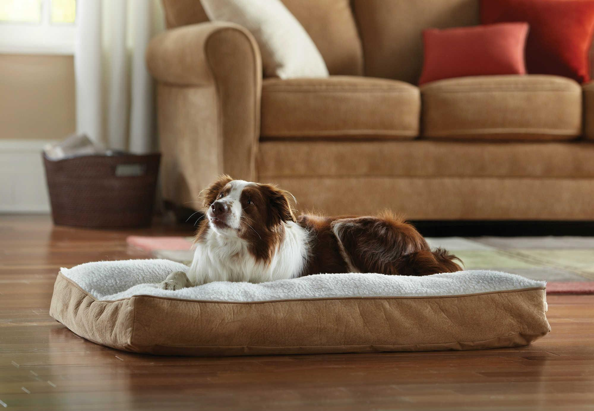 Amazon.com : Animal Planet Sherpa Pet Bed, Large : Animal Planet ...