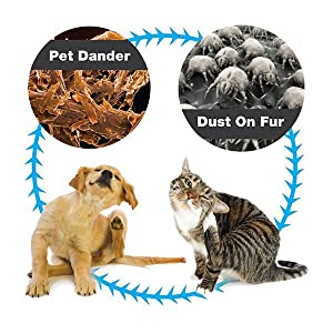 How To Remove Dog Dander From Home