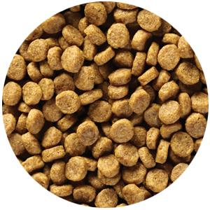 limited ingredient dry cat food kibble
