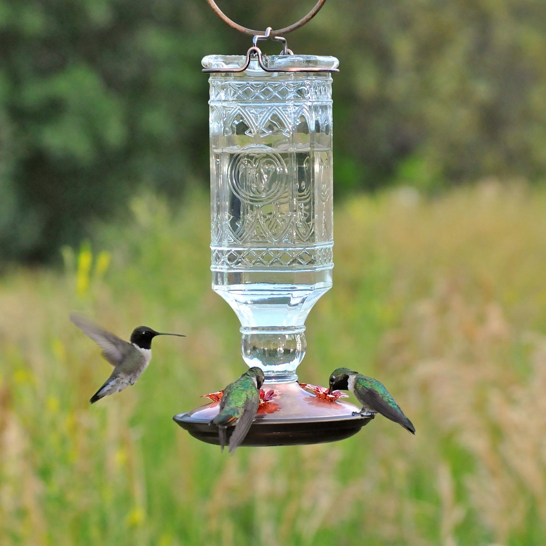 Amazon.com : Perky-Pet 8118-2 Glass Antique Bottle Hummingbird Feeder, Clear : Wild Bird Feeders ...