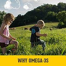 organic eggs, organic valley, omega-3 eggs