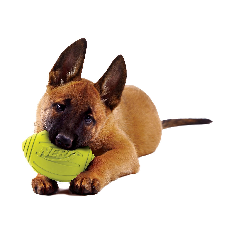 Amazon.com : Nerf Dog Squeak Ridged Rubber Football Dog