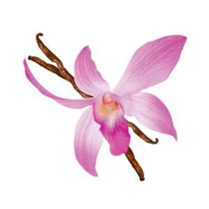 Wild Orchid Wonder