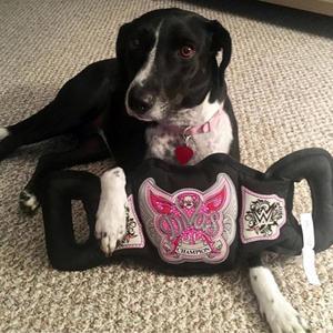 Amazon Com Wwe Championship Tug Dog Toy Pet Supplies