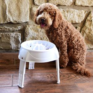 raised dog dish, raised dog bowl, elevated dish, elevated bowl, slow feeder, slow dogs eating