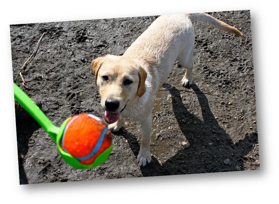 Pet Supplies : Chuck It : Chuckit! Classic 26M Launcher