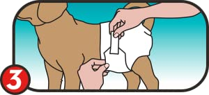 Step 3 Of Putting On A Disposable Dog Diaper