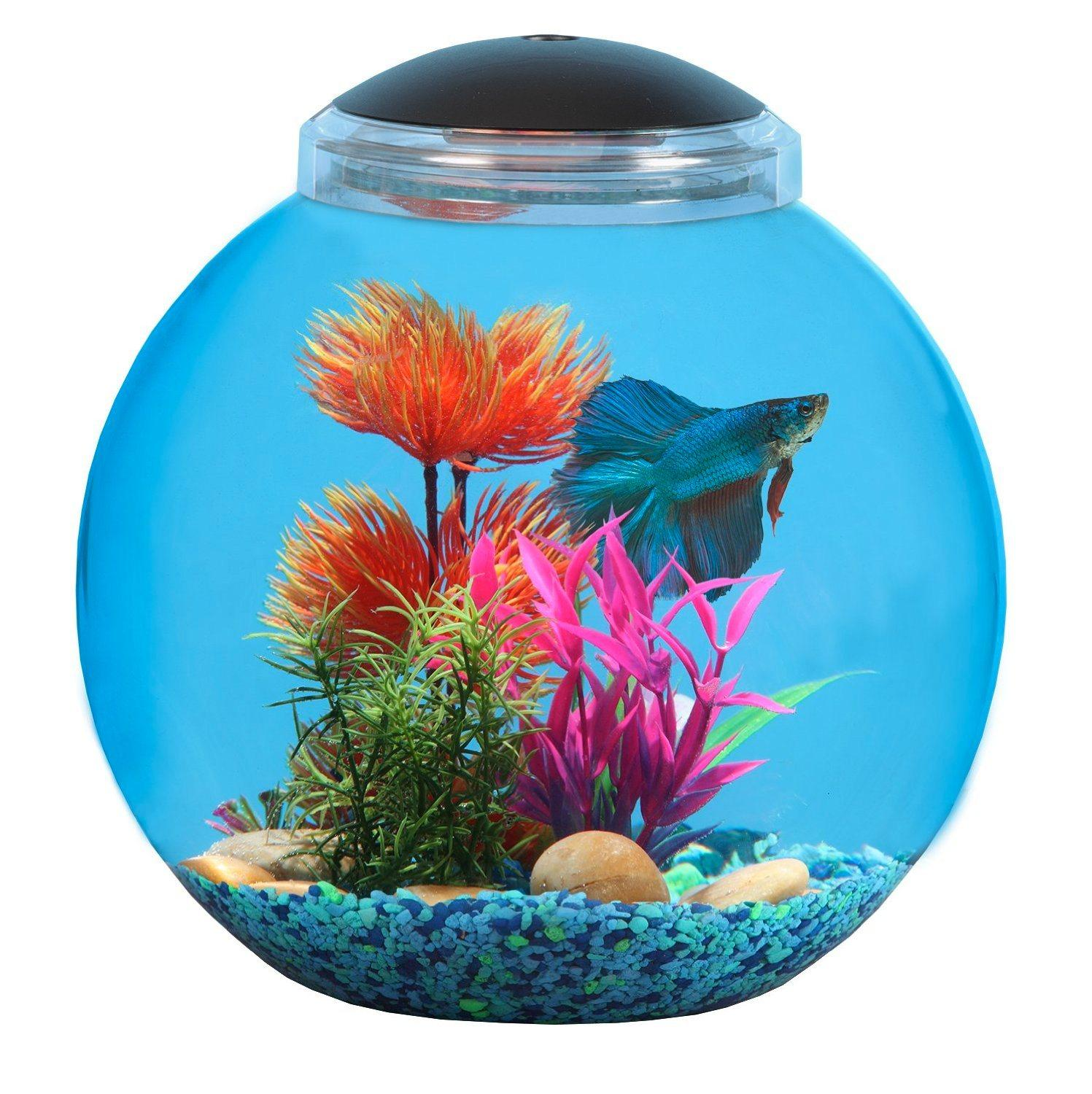 Api betta kit fish tank 3 gallon pet supplies for Betta fish tanks amazon