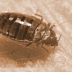 Amazon Com Sleep Tite Encase Lab Certified Bed Bug Proof