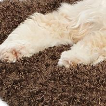 Paw Pleasing Fur