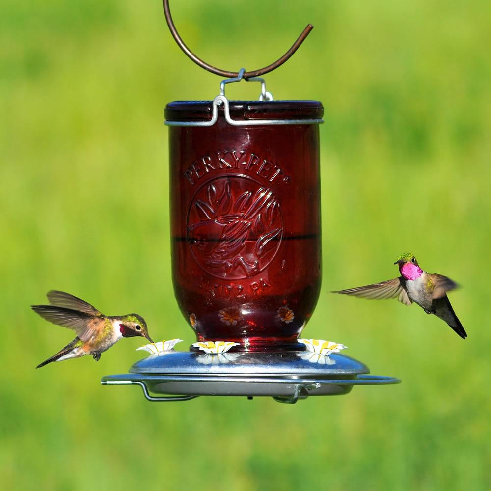 perky glass hummingbird humingbird daisy vintage chewy red feeder vase prevnext com ac pet dp