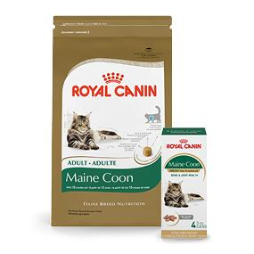 royal canin breed health nutrition maine coon. Black Bedroom Furniture Sets. Home Design Ideas