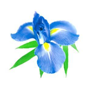 Amazon Com Snuggle Laundry Scent Boosters Blue Iris