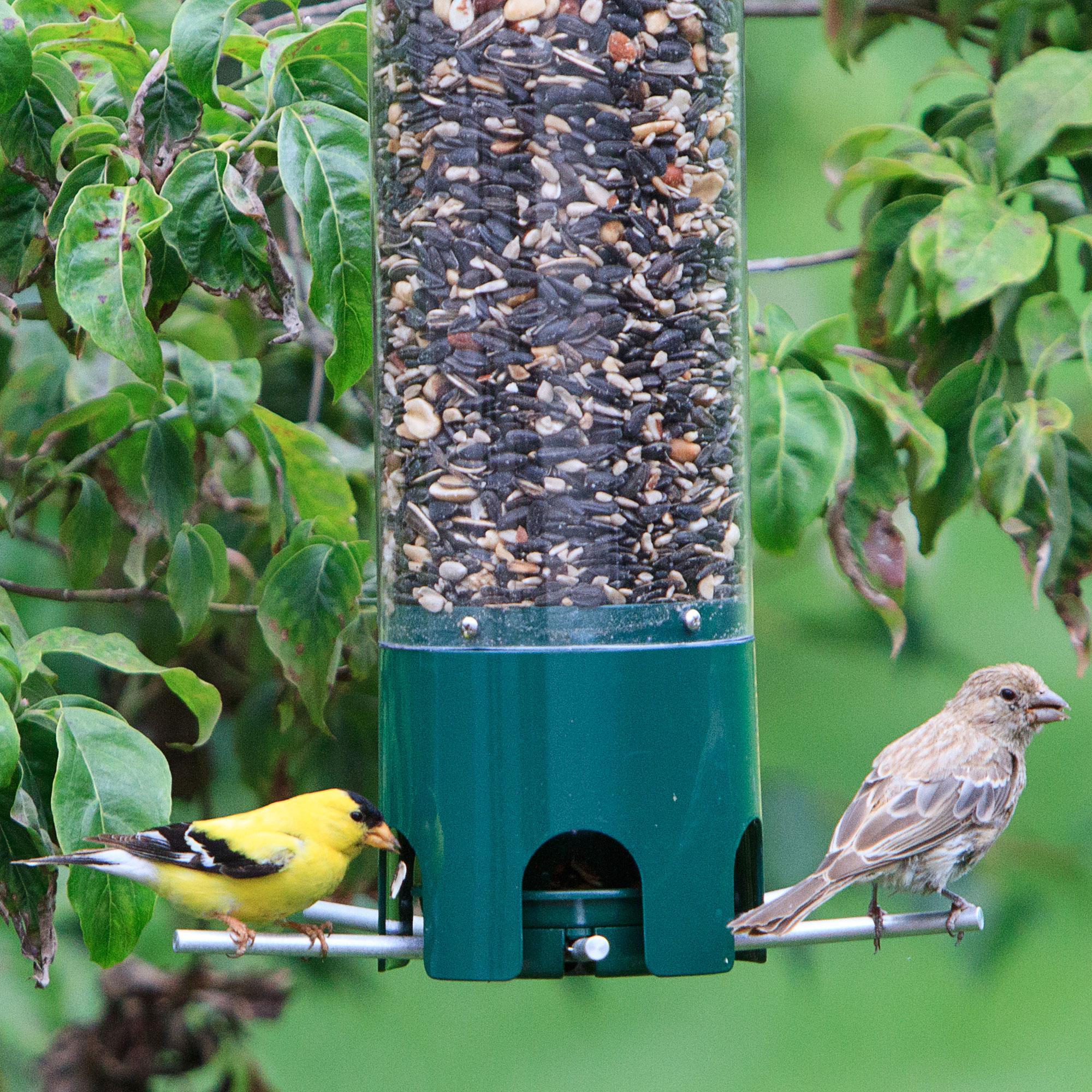 Outdoor seasons squirrel be gone iii bird feeder-9174