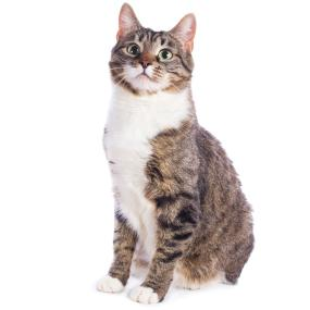 cat food,natural cat food,dry cat food,healthy cat food,cat chow,catfood,cat foods