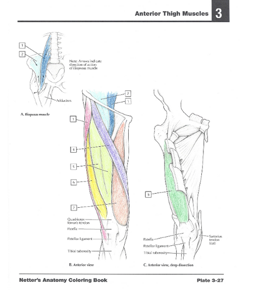 Netter's Anatomy Coloring Book: with Student Consult Access, 2e ...
