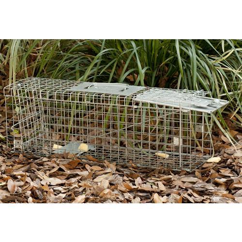 Amazon.com : Havahart 0745 One-Door Animal Trap for