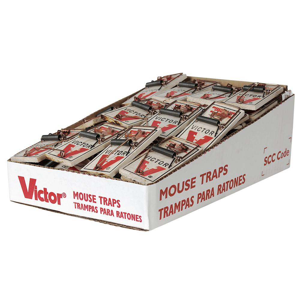 mouse traps Over the years i get this question quite a lot what is the best bait for mouse traps is there any one thing that will lure them in time after time without fail.