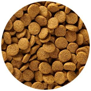 Top 10 Best Dog Food Brands in the UK as Rated and Chosen by Pet Owners