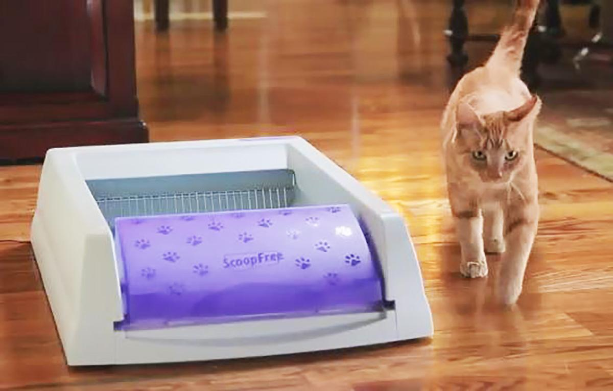 Amazon Com Petsafe Scoopfree Self Cleaning Cat Litter