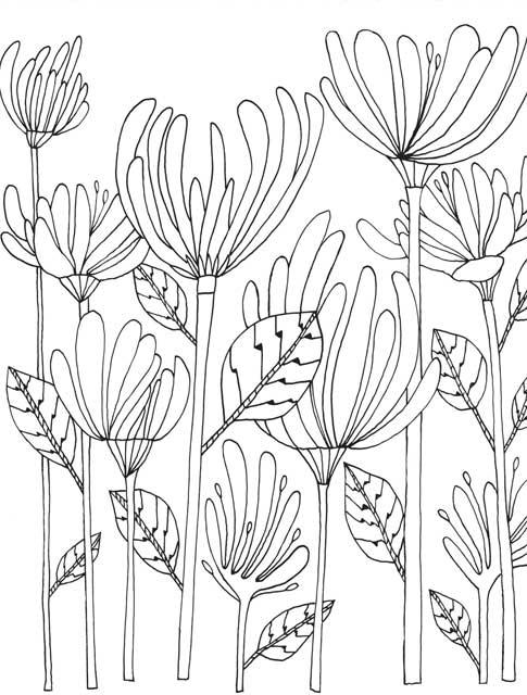 Botany Coloring Pages Coloring Pages