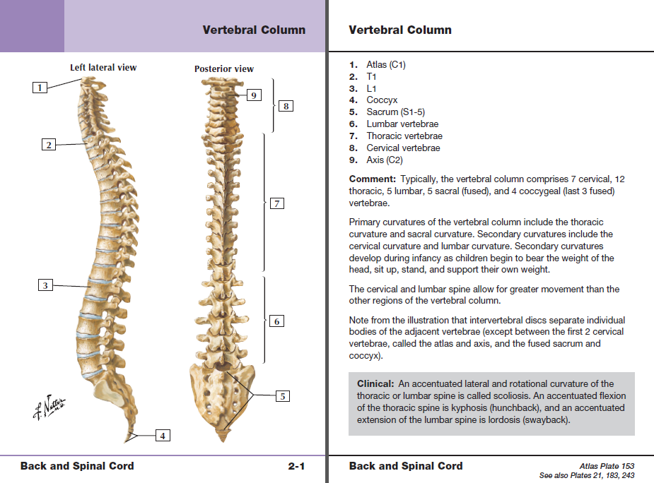Netters Anatomy Flash Cards With Online Student Consult