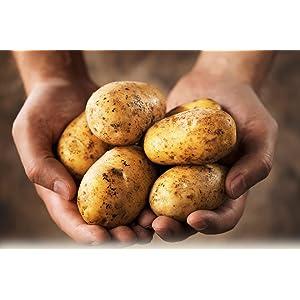 french fry cutter potato slicer fries potatoe maker slicer