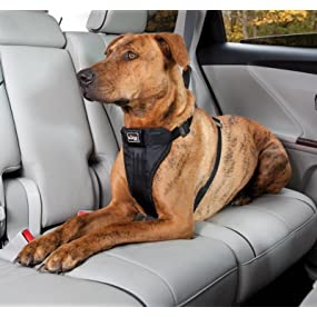 Use with any vehicle seatbelt to secure your dog.