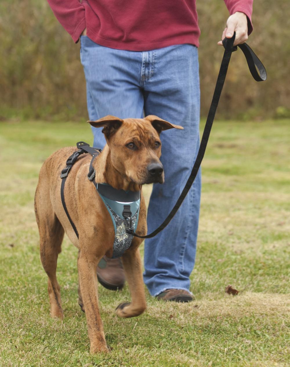 Amazon Com Kurgo Dog Harness With Quick Release Buckles