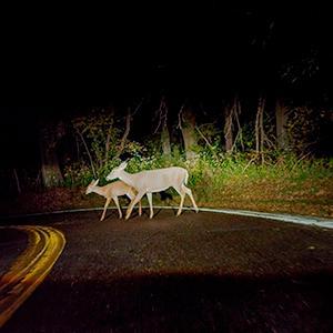 headlight; night driving; downroad