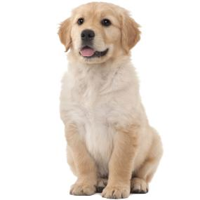 puppy food,natural puppy food,puppy chow,puppy dog food,dry puppy food,healthy puppy food