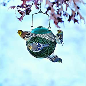 No/No Green Seed Ball Wild Bird Feeder