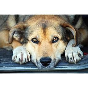 dog claws,