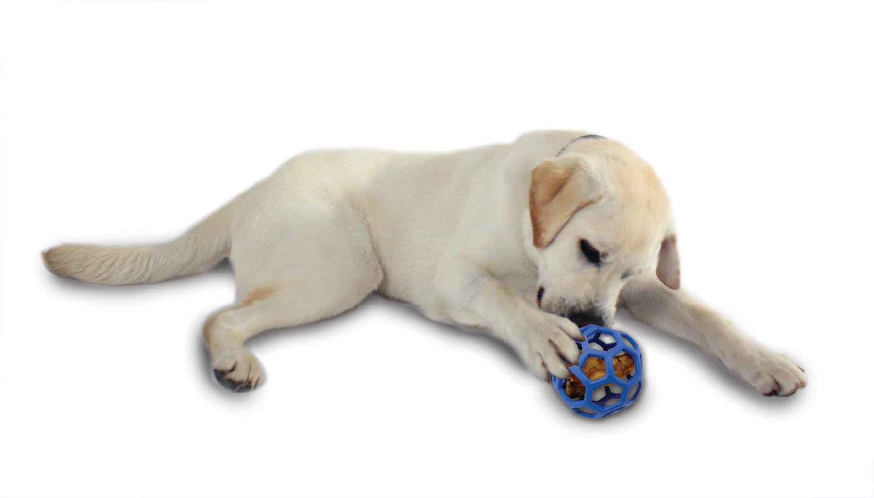 Can Dog Eat Teething Bone