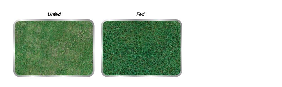 how to get a green lawn quick