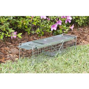 how to set a live trap for squirrels