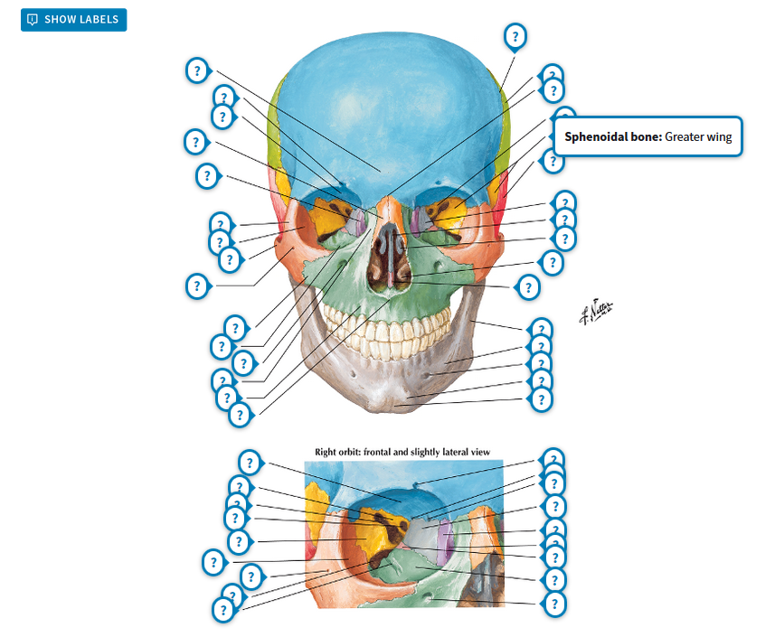 Atlas Of Human Anatomy Including Student Consult Interactive